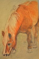 Palomino drawing WIP 2 by CanveySue