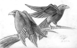 Huginn and Muninn by SolidJB
