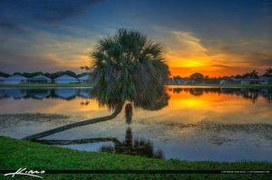 Sunset-Lake-with-Palm-Tree-Palm-Beach-Gardens-Flor by CaptainKimo