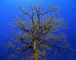 The Tree by rdswords