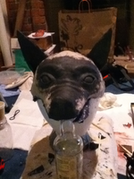 Vulpes Inculta mask- WIP by Captain-Forest