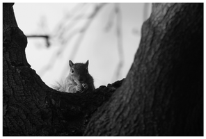 Squirrel by DR1983