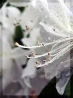 .fragile. by witchlady750
