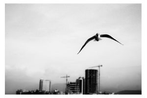 flying_01 by misal