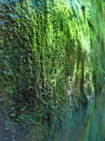 Wall of Moss by KingSexyStudKitty