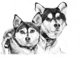 Huskys by CKArtpage