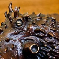 Details on 'Cephalopod' by bronze4u