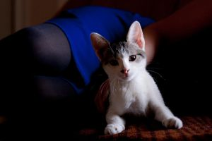 furballtwo by annacuamic