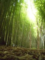 Bamboo Forest by BradleeDeann