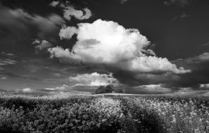 A rapeseed field by Rajmund67