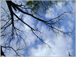 Branch by Iuliaq
