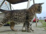 Kittens Gallery-Haru Pointer by Shindou-Chan