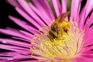 Collecting Pollen V by dalantech