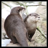Otters by Globaludodesign