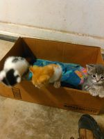 Kittens in a Box by KingSexyStudKitty