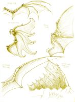 Dragon anatomy- wing study by turel
