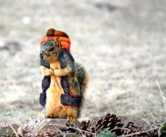 Squirrel on a hike by Hippiedeb