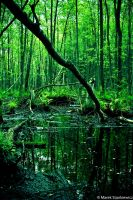 Swamp forest by GreenShadow23