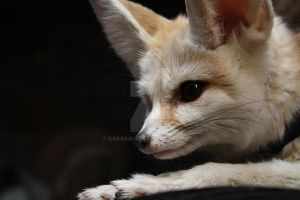 Watchful Fennec by KabakaLion