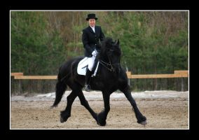 Friesian by Paabel
