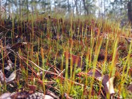 Orange Moss by sioranth