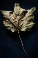 Letters From The Autumn III by JoannaRzeznikowska
