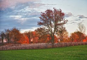 Autumn tree by RavensLane