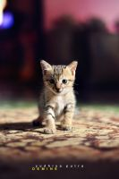Hi, my name Pinpin... by deMinegraphy