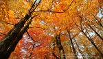 Canopy of Color by mr-sarcastic1984