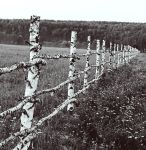 Old Fence by AsseveraVeta