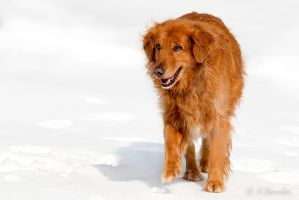 Golden in the Snow by KBL3S