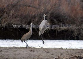 Dances with Cranes by Lhunweth