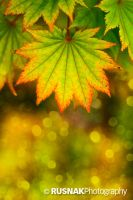 Autumn Bokeh by snak