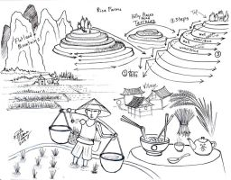 Draw Rice Farms by Diana-Huang