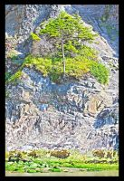 Tree growing on Rocks by jnicol21