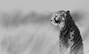 cheetah wip by nosoart
