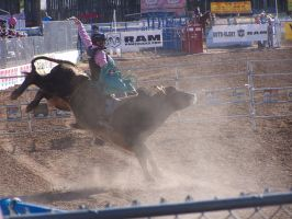Bucking bull by Dragonetti707
