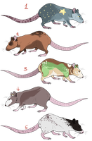 Rat Adoptables: Closed by earthytones