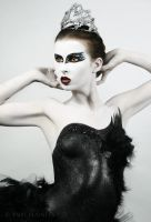 Black Swan III by PorcelainPoet