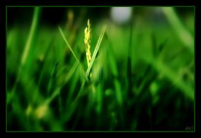 field of summer by ahmedwkhan