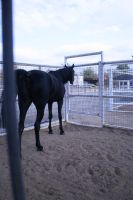 black horse stock 5 by xbr0kendevotion