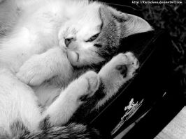 Cats are soooo charming by Karuchna