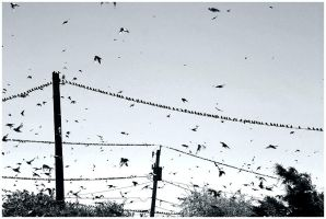 The Birds by Delacorr