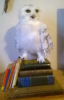 Hedwig on the books by Kreativjunkie