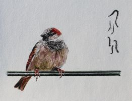 House Sparrow by Boio8010