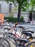 The squirrel on a bike by Ampata