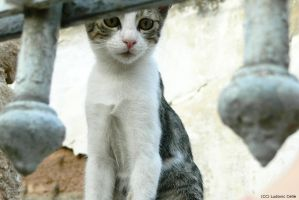 Greece - Athens - Cat 02 by Ludo38