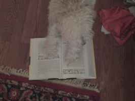My dog is reading a book by SNStudios