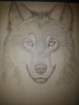 Wolf face by Qaseem3003