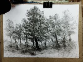 trees by PReih